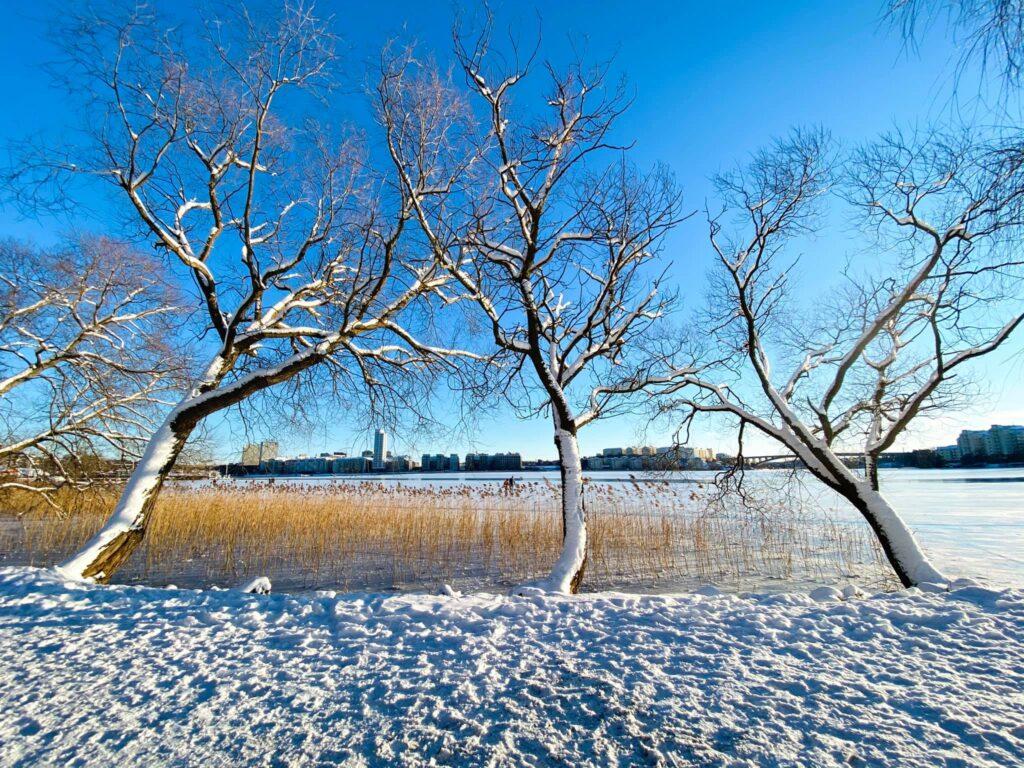 motivation letter học bổng Thụy Điển thiên nhiên